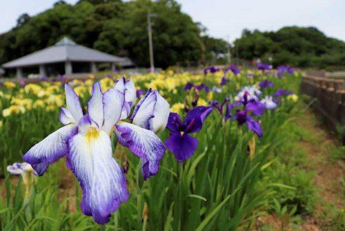 県立亀鶴公園